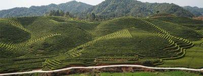 Borse di studio per il paesaggio dalla Fondazione Benetton