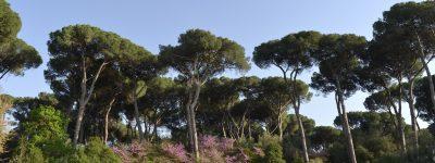 Verde e paesaggio urbano, approvate modifiche al regolamento di Roma Capitale