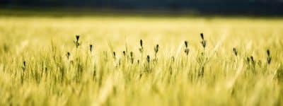 Agrifood, piano strategico di Roma Capitale per il settore agroalimentare