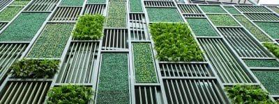 Roma Capitale, dalla forestazione urbana al fotovoltaico nel Piano d'Azione Energia e Clima